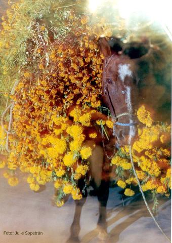 mula con flores