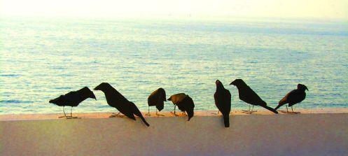 cuervos en el mar
