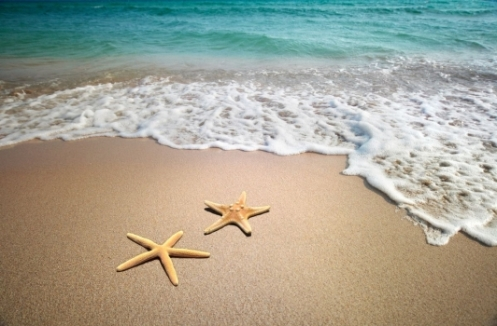 Estrellas_de_mar_en_playa_muralesyvinilos_19804151__XXL