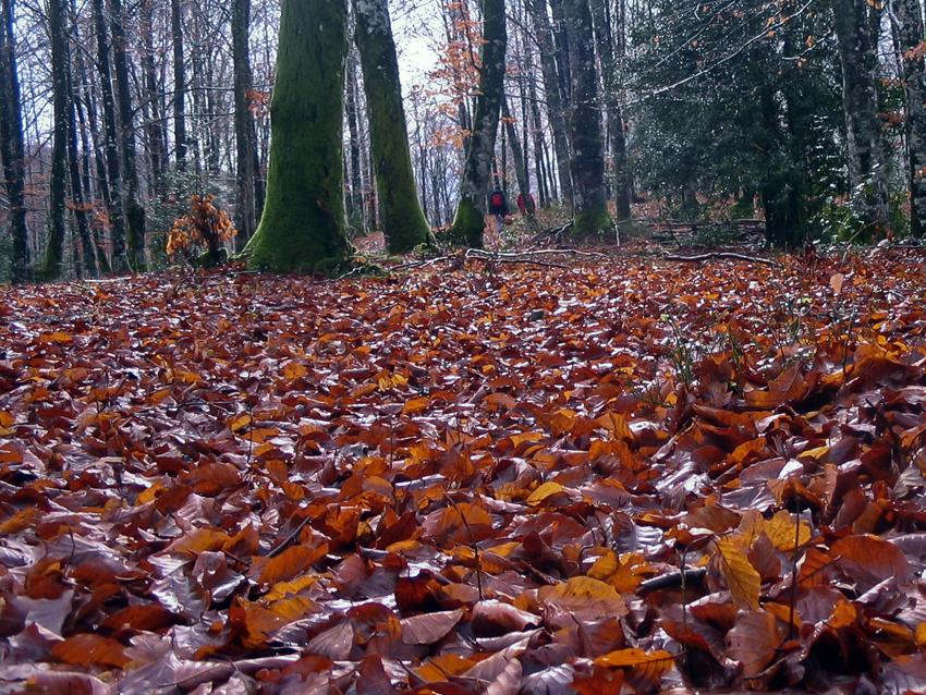 hojas-secaspeq