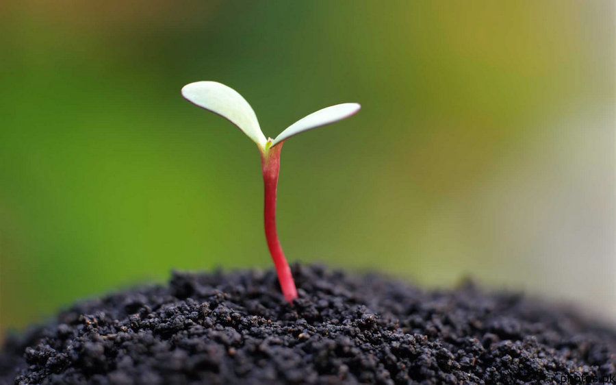 macro-photography-of-seed-germination-3
