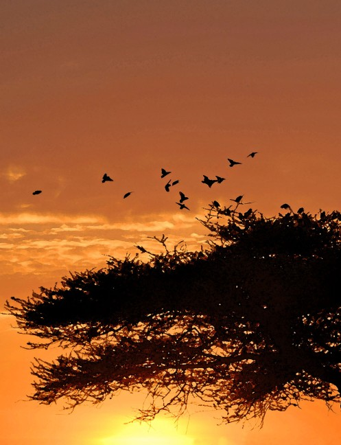 Smith_Ndutu_morning_birds_07