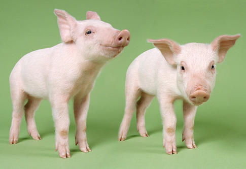 INFANTIL: ANIMALES QUE ME GUSTAN | Eltiempohabitado's Weblog