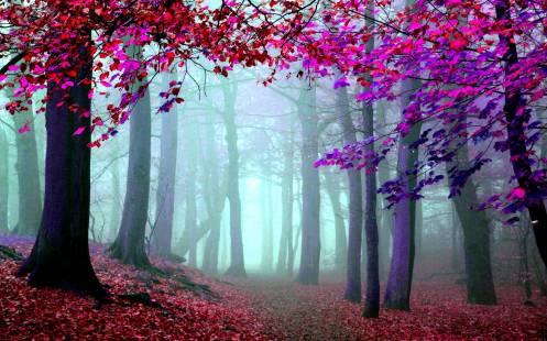 foto-artistica-bosques-1
