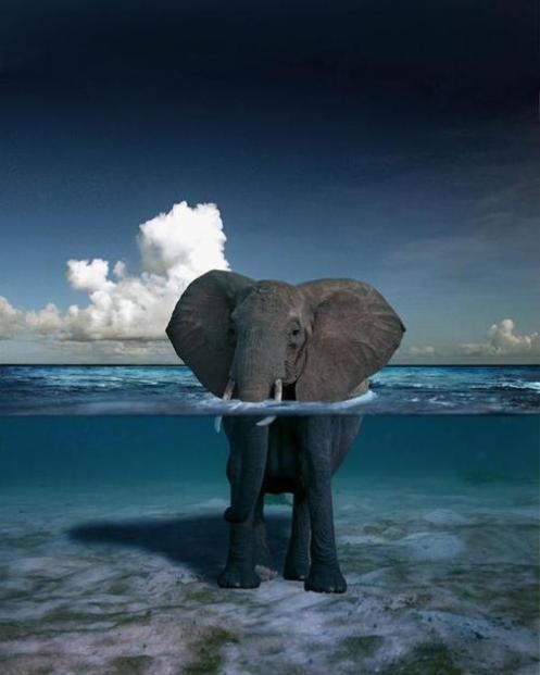 130113_elefante-con-el-agua-al-cuello_1000000-pictures