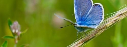 mariposa_azul_en_una_rama-t1