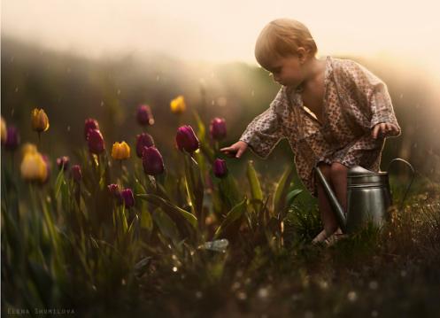 Elena-Shumilova-Photographie-Tulipes