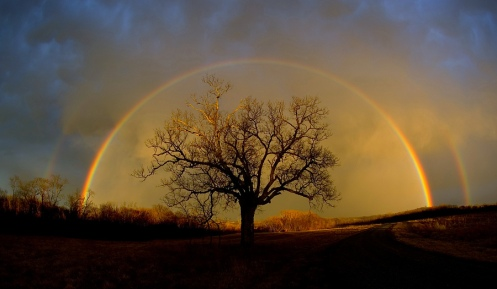 rainbow_elm_tree