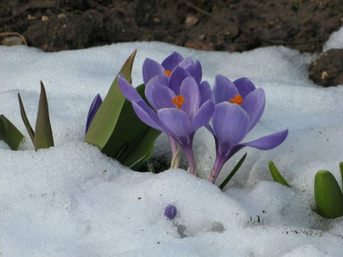 2509-ostern-flower-winter