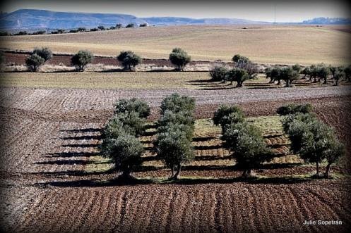 1-olivares y sombras