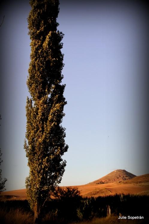 chopo y cerro de Hita