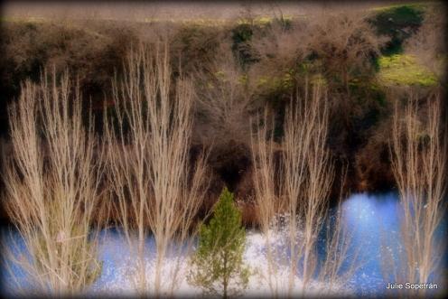 Chopos junto al Río Tajo en Invierno