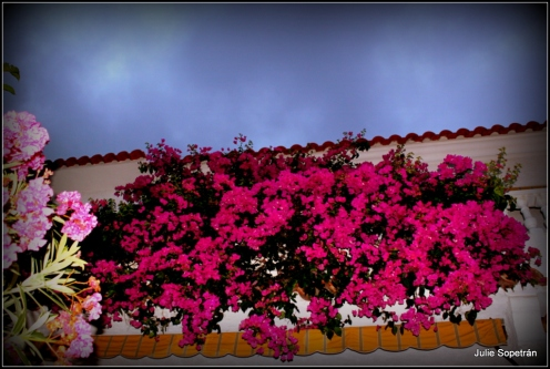 Flores de Oropesa