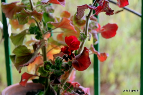 mis flores (1)