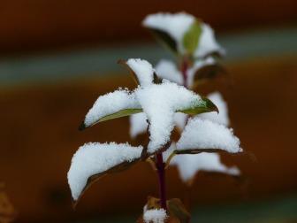 Planta-Hojas-Cubierto-De-Nieve-Invierno-Invernal-800x600